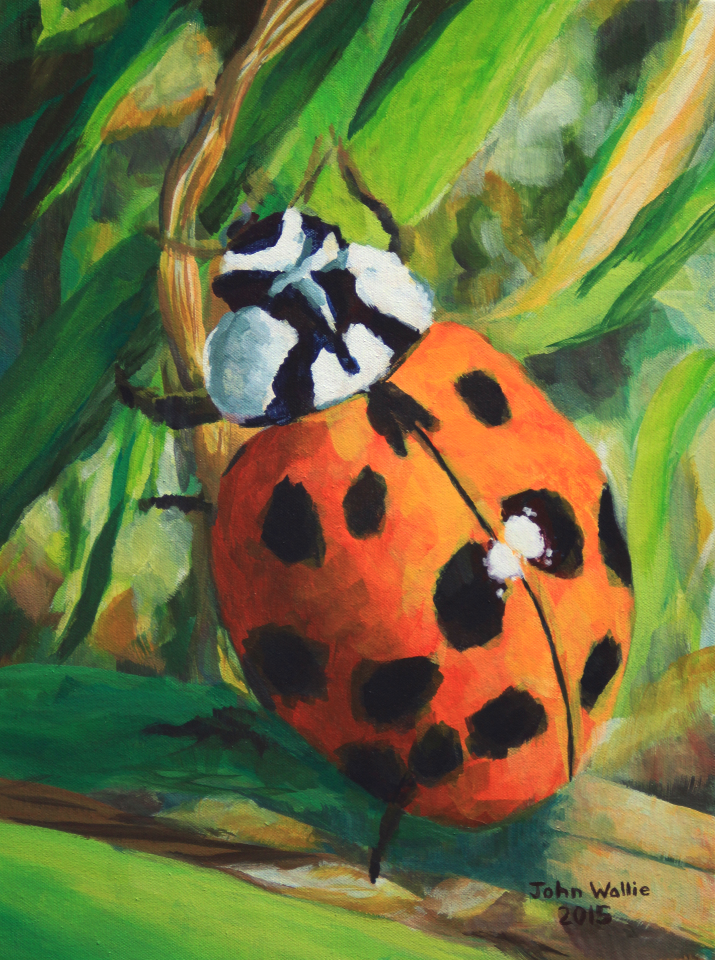 painting of a ladybug