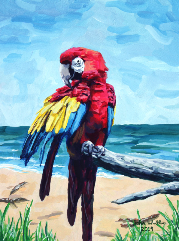 jw_macaw_2_website