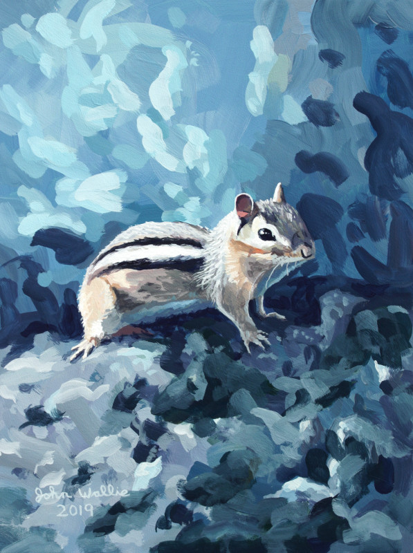 jw_chipmunk_in_blue800