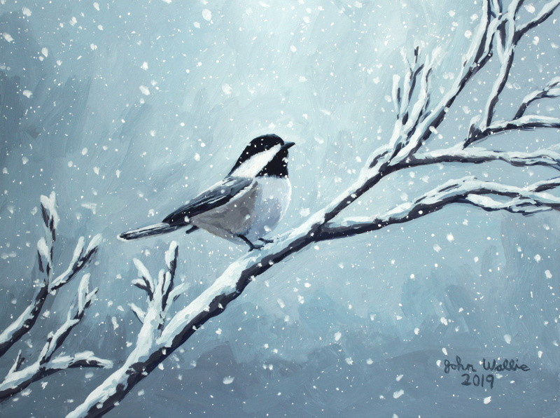 jw_winter_chickadee800